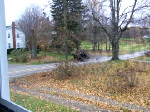 Amish pimp buggy
