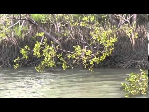Marine Discovery Center 3, New Smyrna Beach, Florida