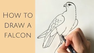 Beginners - How to draw a falcon