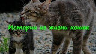 НЕВЕРОЯТНЫЕ ИСТОРИИ ИЗ ЖИЗНИ КОШЕК  INCREDIBLE STORIES FROM THE LIFE OF CATS