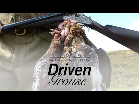 Driven Grouse - Hunters Video