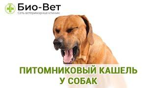 Питомниковый кашель у собак. Ветеринарная клиника Био-Вет.