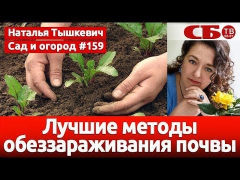 Лучшие методы обеззараживания почвы
