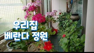 하이디의하루(Vlog)/베란다정원/직박구리/사과먹방/제…