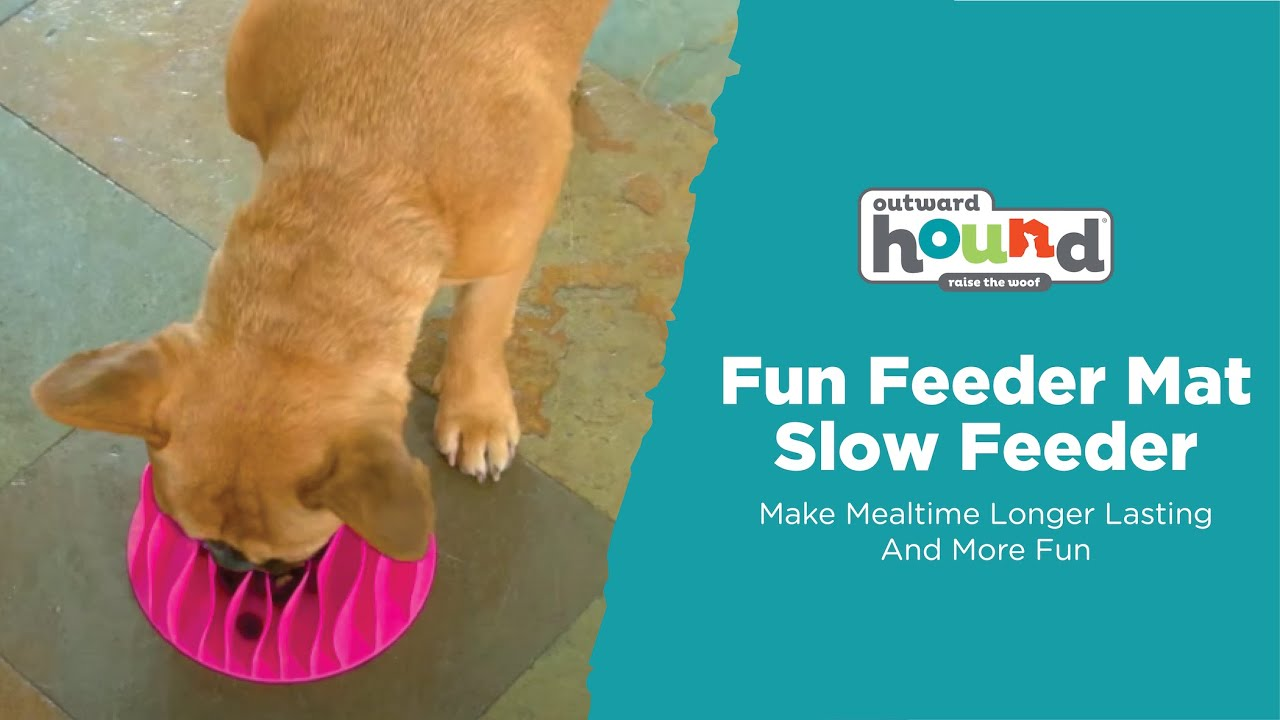 review daisy bowl of feeder feeding fun outward bit hound slow is new her dog suspicious best a