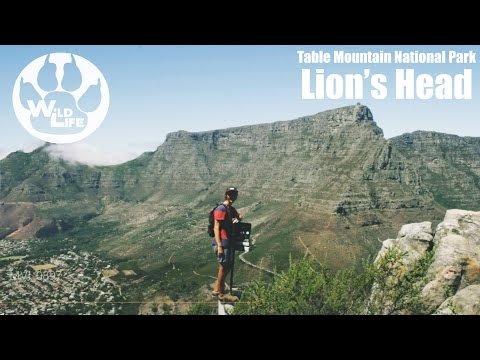 Lion's Head and Signal Hill | Table Mountain National Park - theWildLife