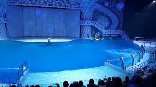 Москвариум на ВДНХ. Шоу тайна четырёх океанов