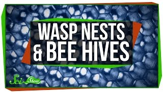 Wasp Nests and Bee Hives