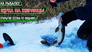 Поставил Все ЖЕРЛИЦЫ под КАМЫШ и ЩУКА Взбесилась Зимняя рыбалка на жерлицы 2021