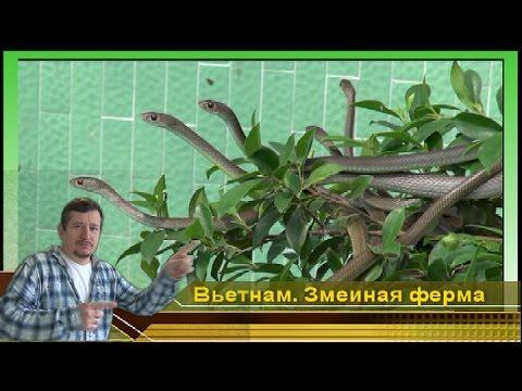 Золотая Коллекция Советских Мультфильмов (1936) смотреть