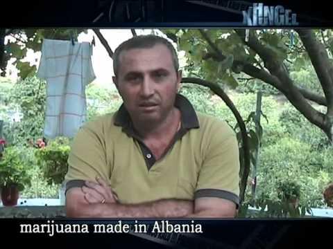 Xhungel marijuana made in albania