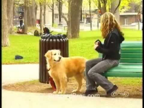 Chú chó kỳ lạ