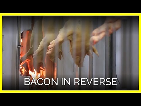 Bacon in Reverse
