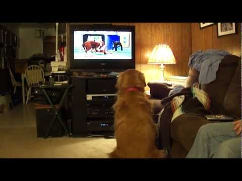 Dog watches Puppy Super Bowl VIII on TV  (1 of 2)