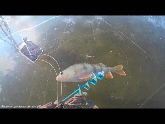 ЗИМНЯЯ РЫБАЛКА на окуня! САМОДЕЛЬНАЯ блесна! Первый выход на лёд! Рыбалка Астрахань!