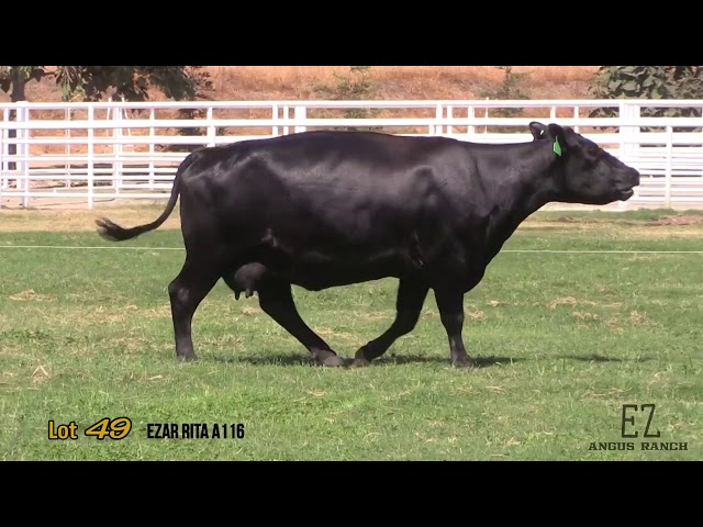 EZ Angus Ranch Lot 49
