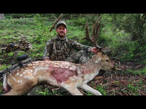 Bowhunting Fallow Deer 2018