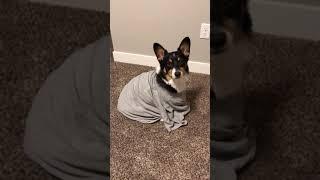 Calvin stuck in a tshirt