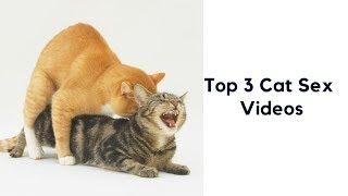 Top 3 Cat Mating Videos (Cat Sex)