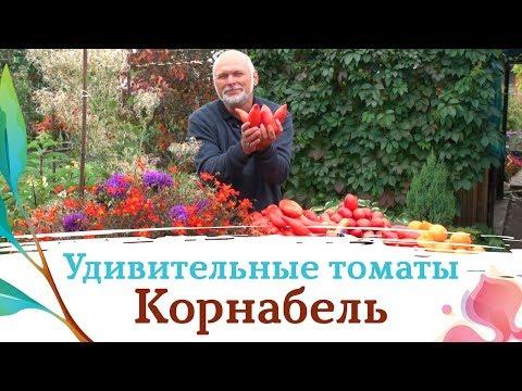 """""""Корнабель"""" - лучший помидор 2019 года"""