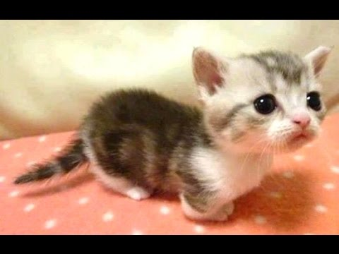 Thumbnail: Baby Animals - A Cute Animal Videos Compilation || NEW HD