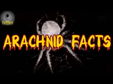 ▶Arachnids | 10 Fun Facts You Didn't Know About Spiders◀