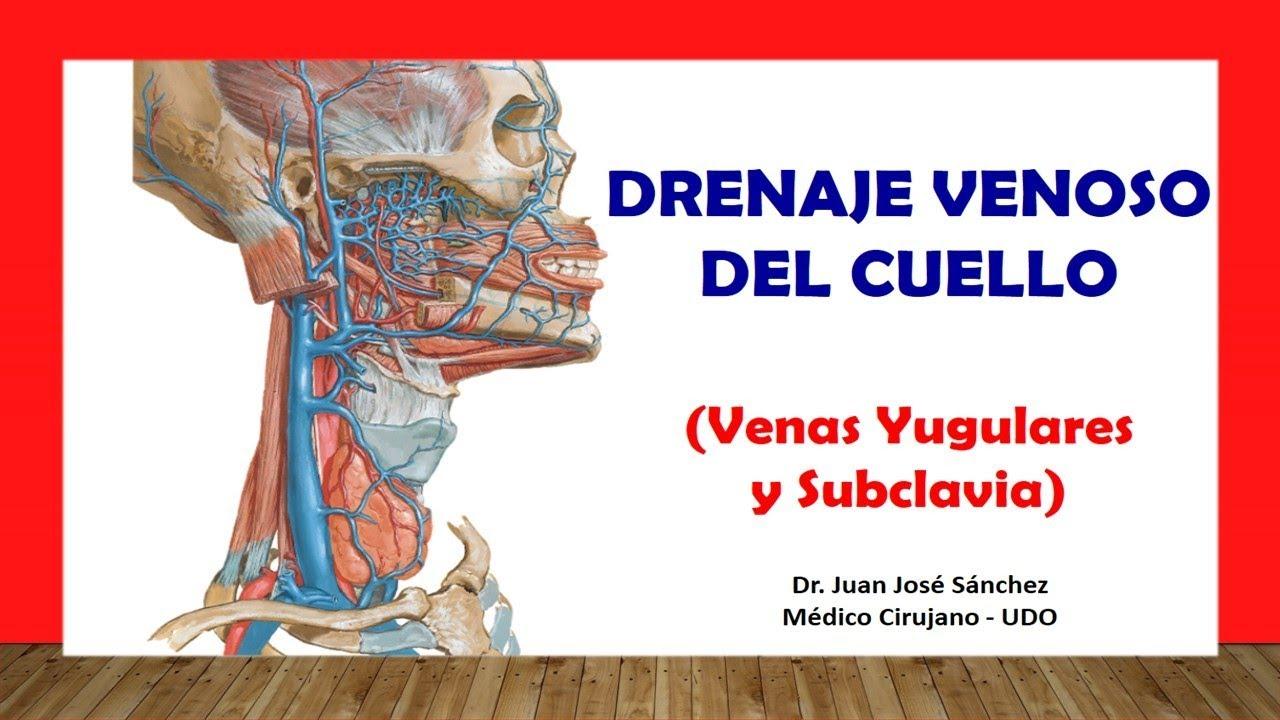 Cuello 6 - Venas del Cuello, Yugular Interna, Externa, Subclavia ...