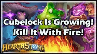 [Hearthstone] Cubelock Is Growing! Kill It With Fire!