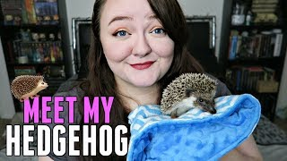 Meet My NEW Hedgehog