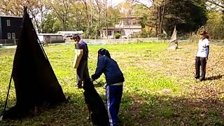 ALSOK北関東綜合警備保障の警備犬 ジャーマンシェパードドッグ 翔くんの...