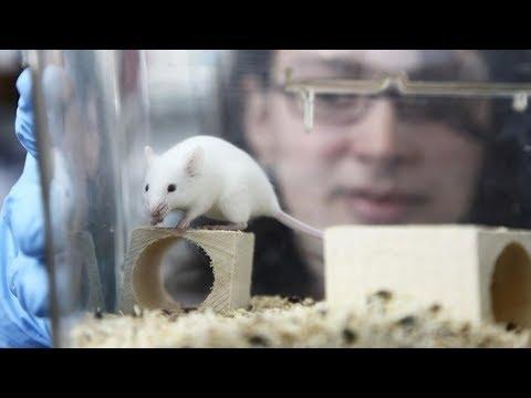 Autism Symptoms Reversed in Lab Mice