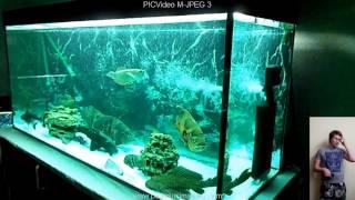 Интерактивный аквариумный туризм №8(Рубрика, куда вы присылаете свое видео и описание аквариума, а мы делаем из этого выпуск. Тема для Заявок:..., 2014-10-13T10:06:31.000Z)