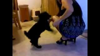 Sapık Köpek Kadına Bakın Ne Yaptı ? :) / Psycho Dog Is Doing What ? :)