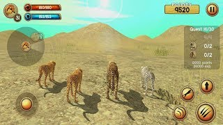 Wild Cheetah Sim 3D Android Gameplay #5