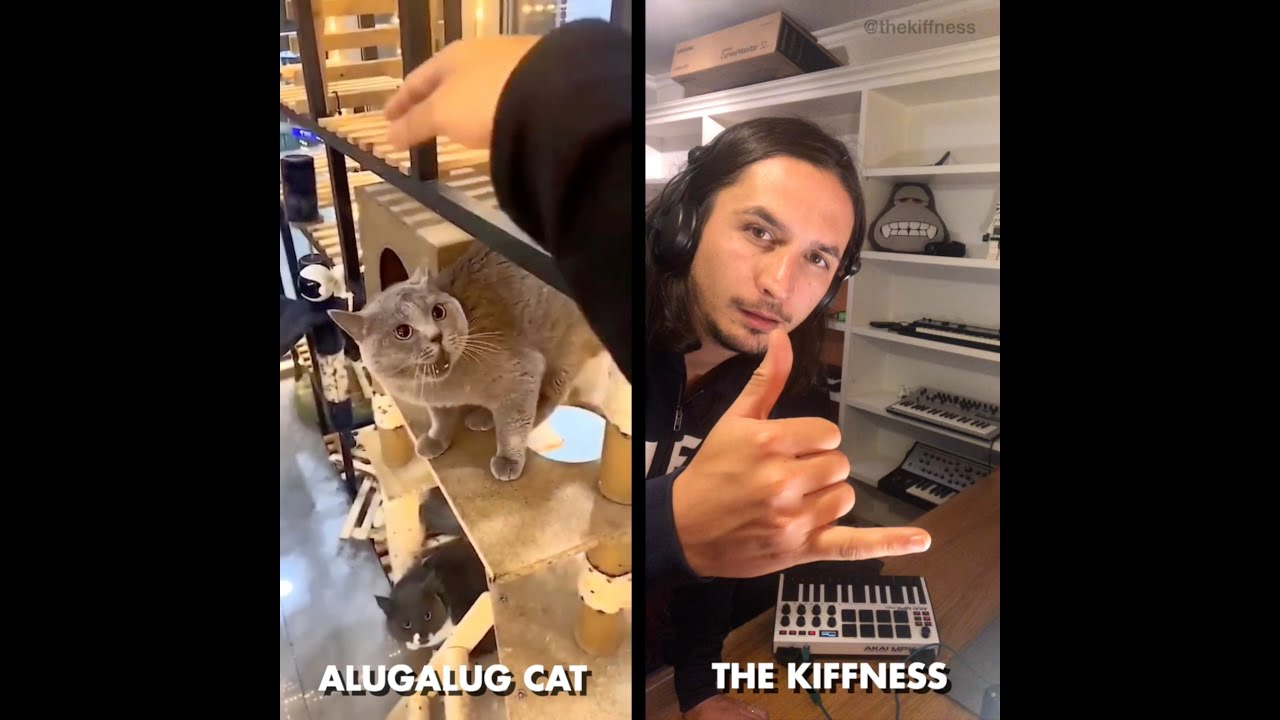 Download Alugalug Cat X The Kiffness (Soulful Singing Cat Live Looping Remix)