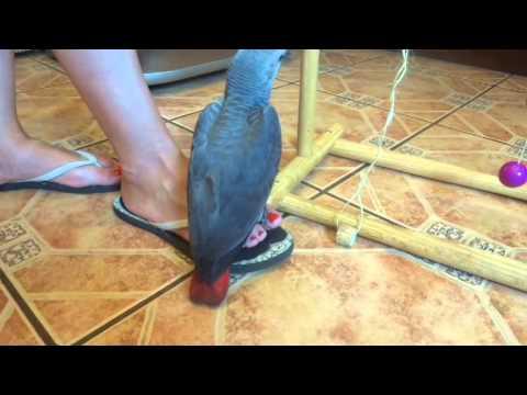 Подруга хочет купить попугая жако и нашла такой прекрасный образец адекватности. Попугаи оптом авито, продавец, неадекват, нищеброд, жако.