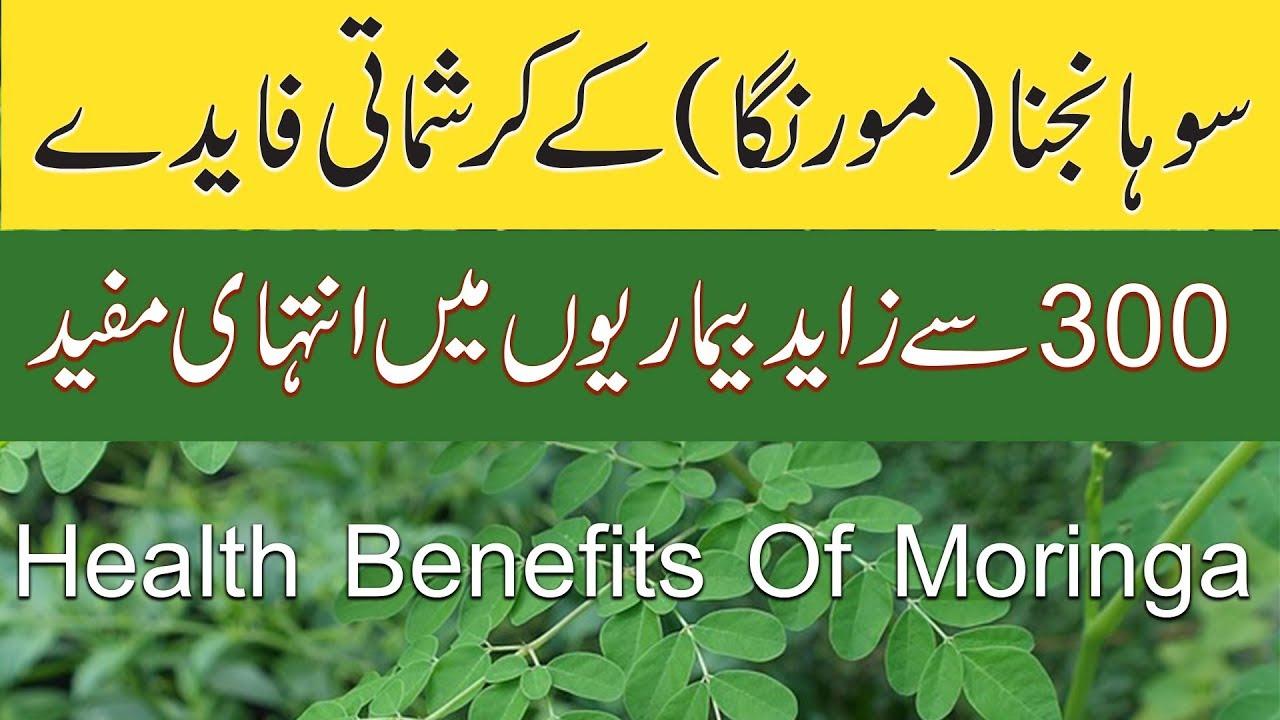 sohanjna benefits in urdu   health benefits of moringa in urdu   moringa  oleifera