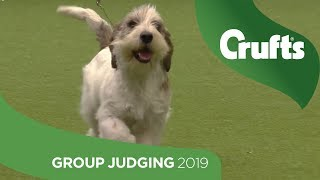 Subscribe to Crufts: http://bit.ly/20QlwUp Full replay of the Hound...