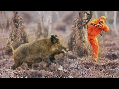 Best of Wild Boar Hunting. Excellent Video Collection of Good Shots 2021