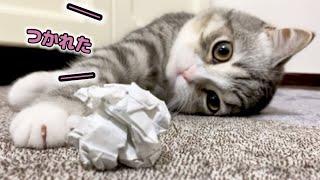 もち猫のやる気がない日の遊びはこうなっちゃいます…