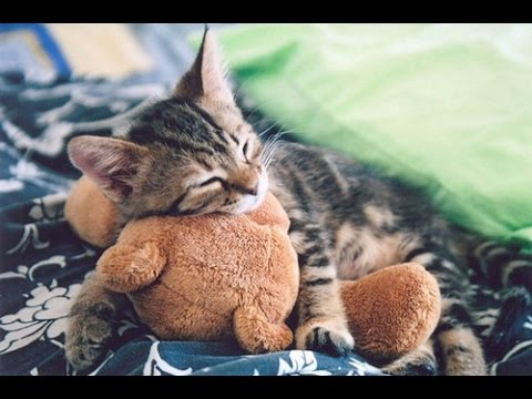 Cute cats sleeping with teddy bears compilation