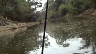 Video Pescada rio das Almas -  Ercio download MP3, 3GP, MP4, WEBM, AVI, FLV Oktober 2018