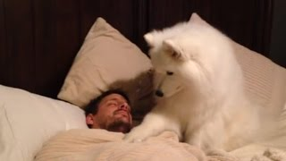 Cute dogs waking up owners | Fun Story
