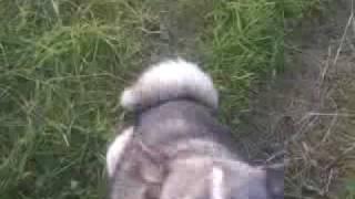 Собака по клички Гром