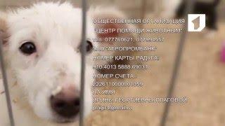 Приют для бездомных животных: дворовые щенки ищут новую семью