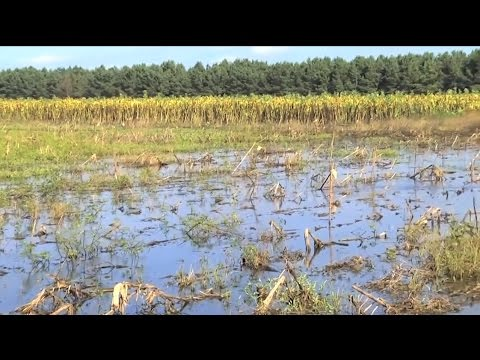 South Carolina Farm Bureau President Talks About Flood Recovery