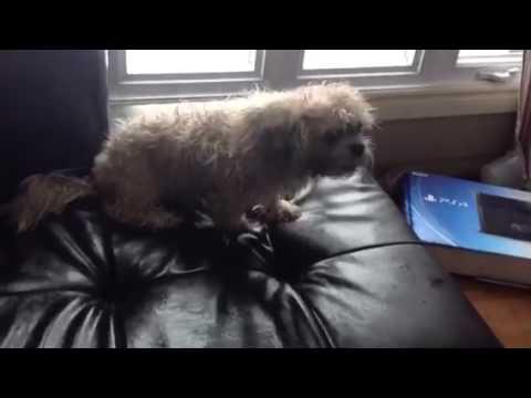 Mon chien mouiller. il est fou! ( il est mort😭😭)