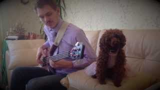 Pink Panther OST Bass Cover