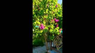 """Гостиничный комплекс """"Райский сад"""""""