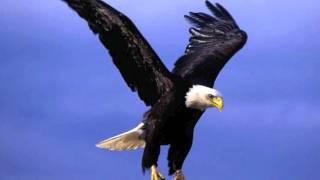 The Best Eagle Screech!!!